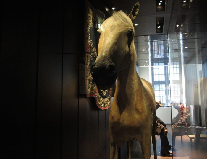 Vizir the horse in 2014 (photo by the author for Hyperallergic)