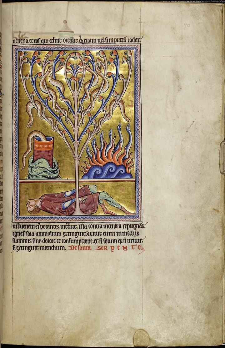 Detail of folio 70r from the Aberdeen Bestiary showing a dead man lying at the foot of a tree writhing with salamanders