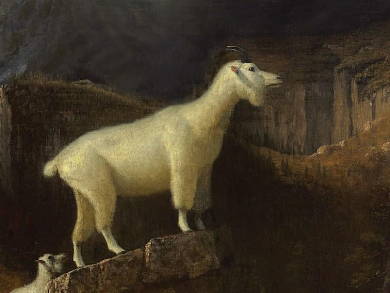 "Albert Bierstadt, ""Rocky Mountain Goats"" (1885) (via Wikimedia Commons)"