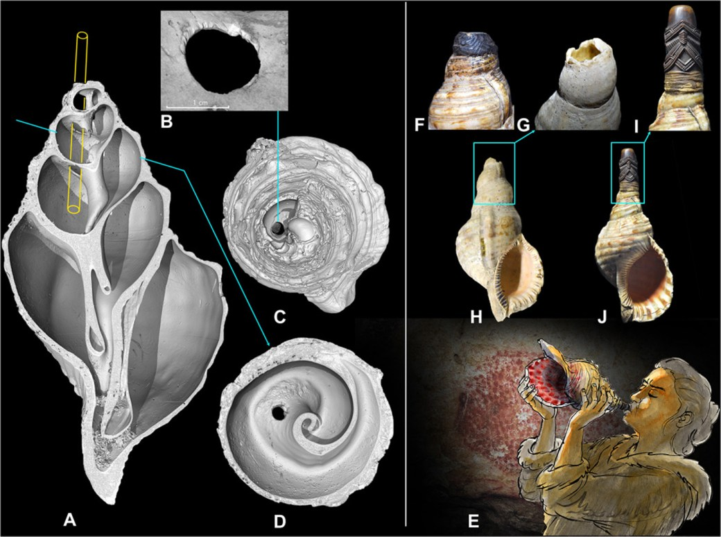 Marine shell of Charonia lampas from Marsoulas cave in France. (A) Side view. (B) Front view and naming of the anatomical areas. (C) Vestiges of red pigment preserved on the columella (image enhanced with Dstretch-rgb0). (D) Tracing of red dots and lines visible on the enhanced photo. Very similar red dots, produced with the fingertips, are present on the walls of the cave. (5) Set of red dots forming a bison silhouette (length, 1.10 m). (6) Geometric sign formed by a double line of dots. [Photos (A to C, E, and F): C. Fritz; drawing (D): G. Tosello.] (image via Science Advances)