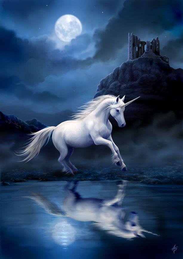L'Unicorno: tra mito e simbologia