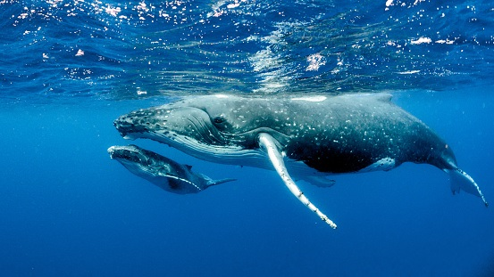 ai being tapped to understand what whales say to each other hyperedge embed image