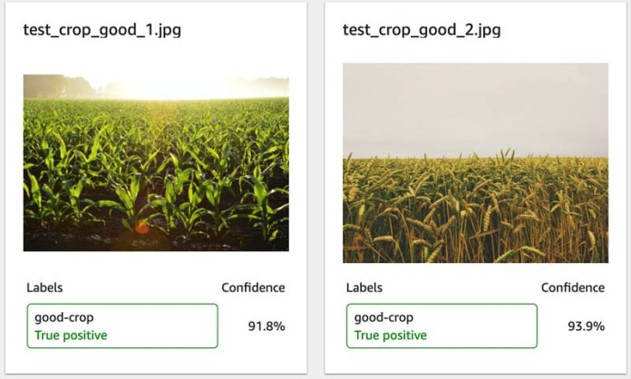 automate weed detection in farm crops using amazon rekognition custom labels 6 hyperedge embed image