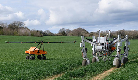 robot removing unwanted weeds in field