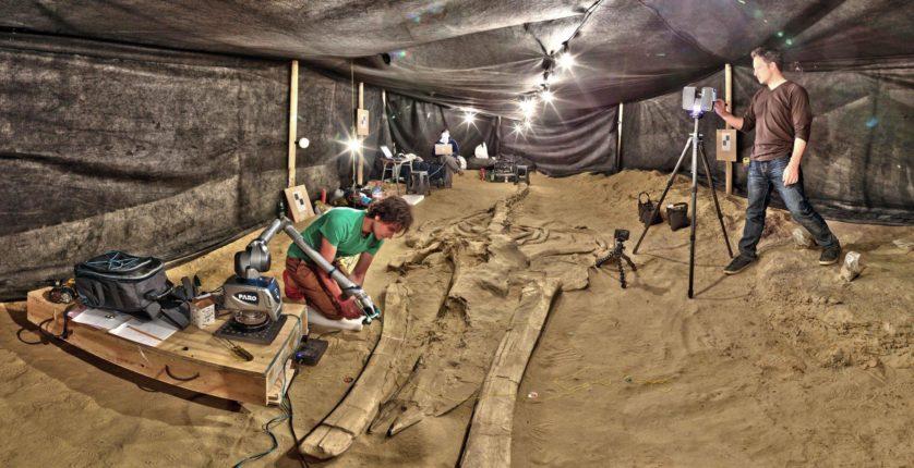 maior conjunto de fósseis de mamíferos marinhos 2