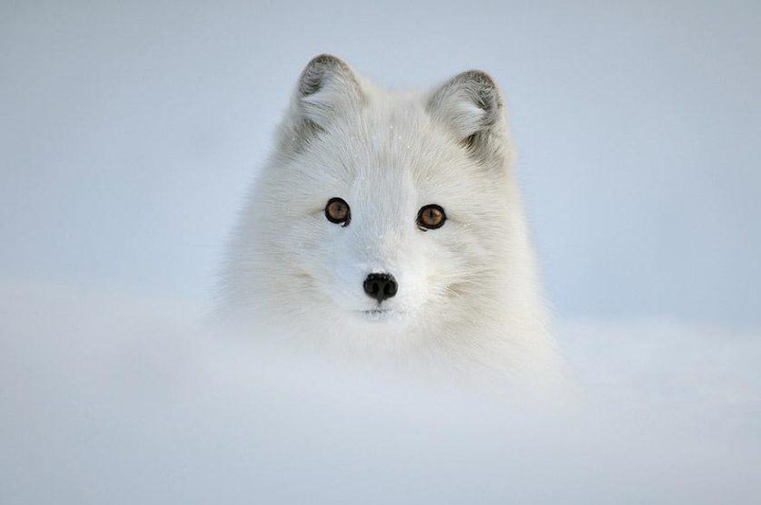 amazing-fox-photos-5