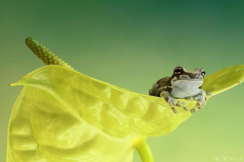 macro-frogs-wil-mijer-16