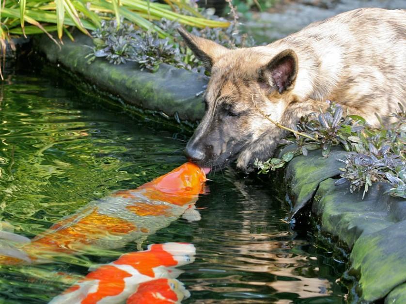 fotos de animais se beijando cachorro e peixe