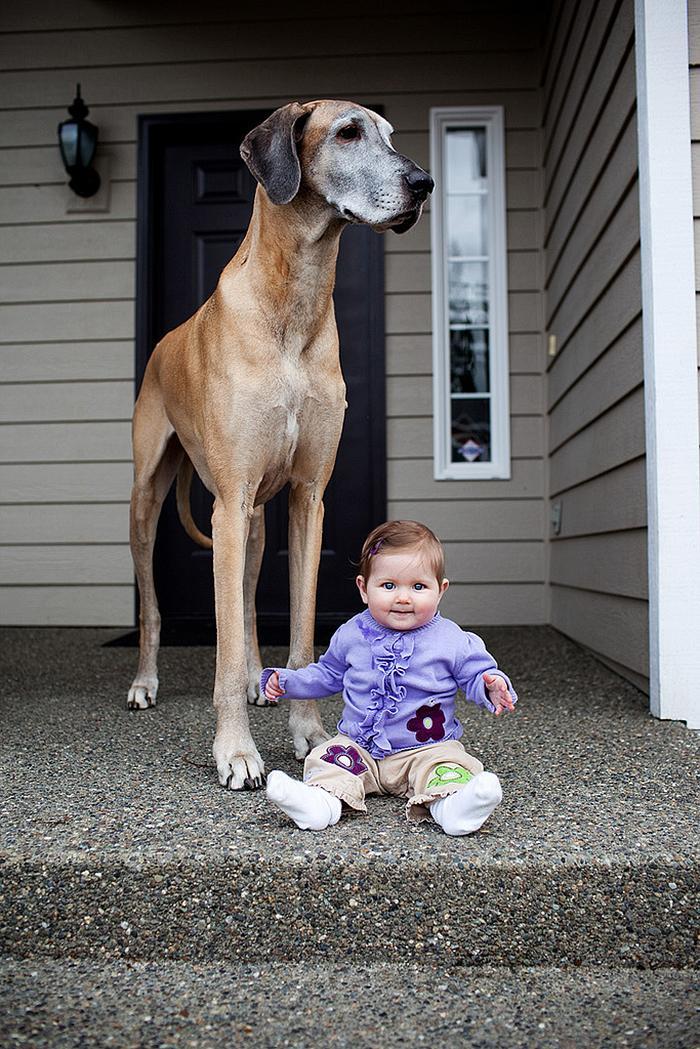 bebezinhos e seus caes (22)