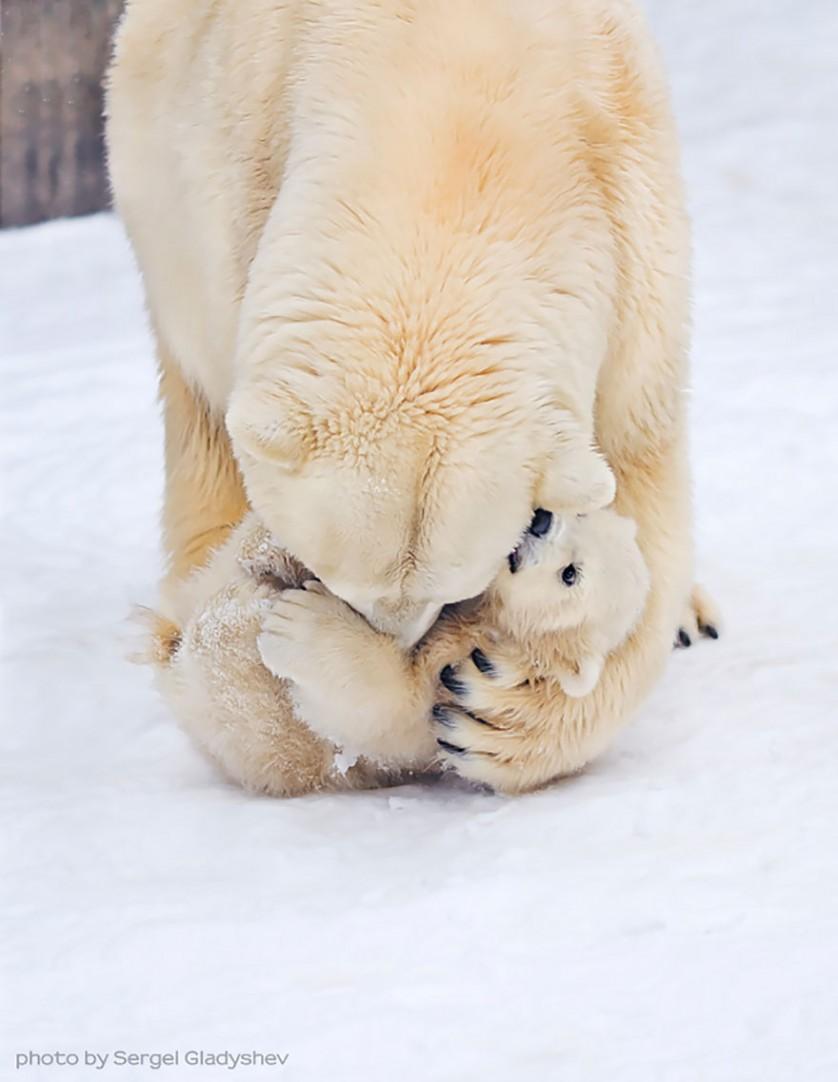 filhotes de ursos 14