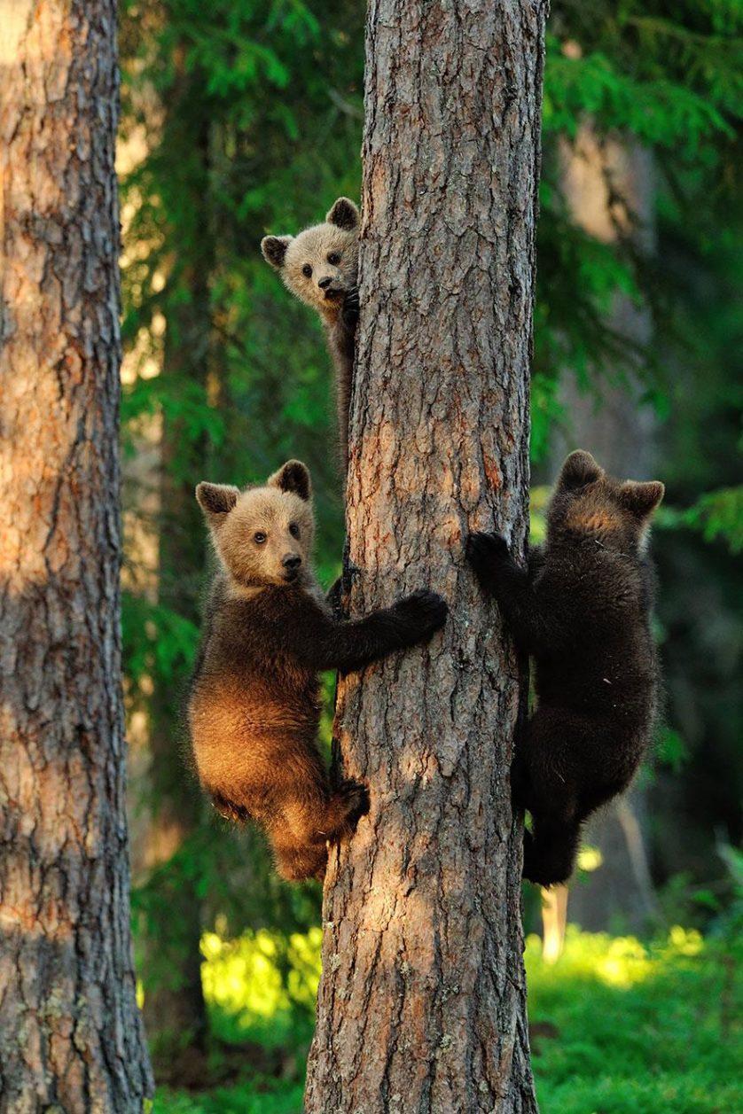 filhotes de ursos 18