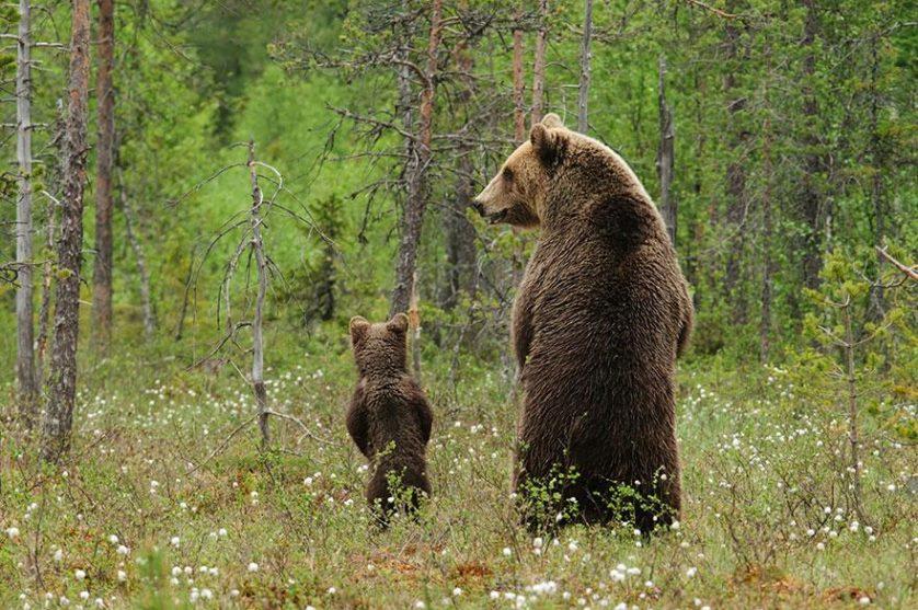 filhotes de ursos 2