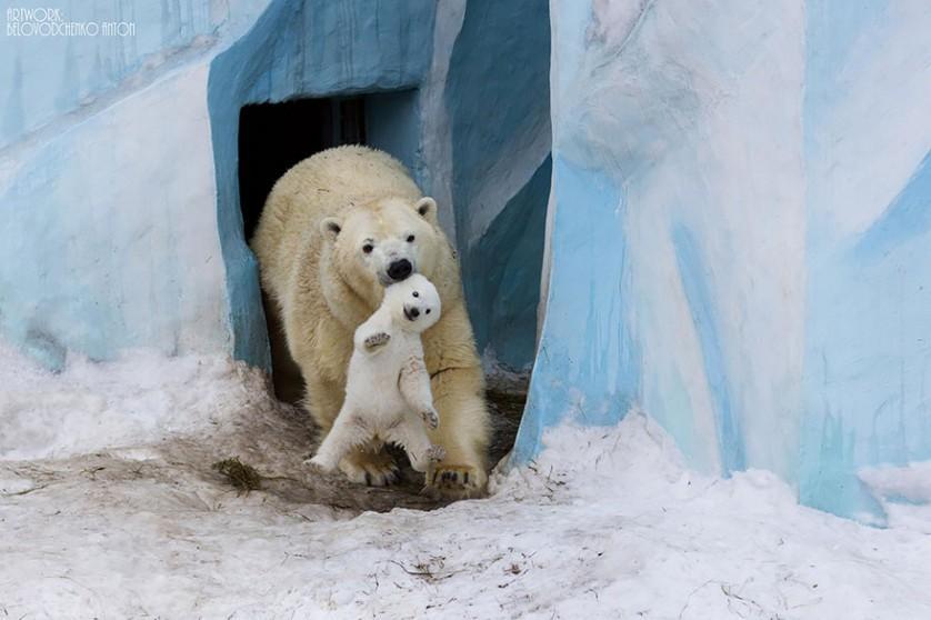 filhotes de ursos 4