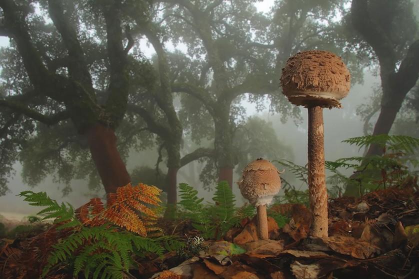 Andres Miguel Dominguez foto de cogumelo mágico
