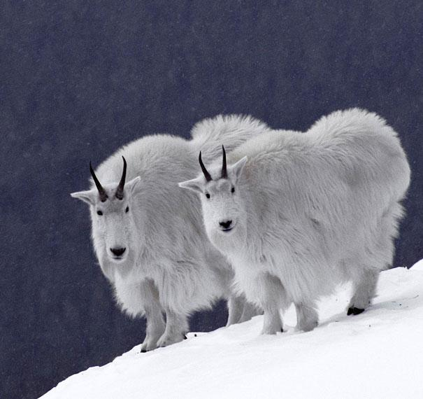fotos de animais gemeos 7