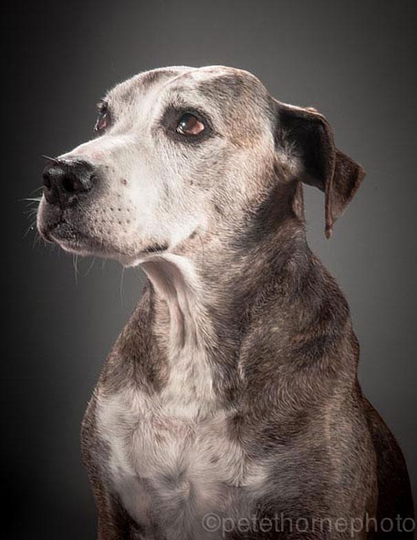 fotos de cachorros idosos 08
