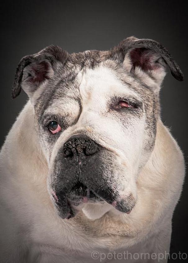 fotos de cachorros idosos 11
