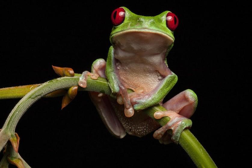 sapos anfibios raros 6-