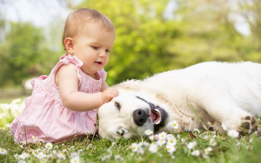 bebes e cachorros (27)