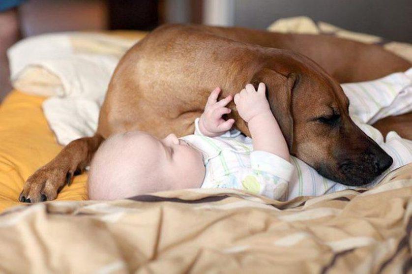 bebes e cachorros (28)