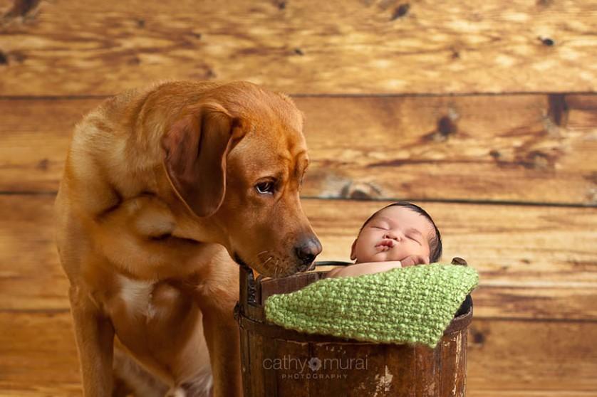 bebes e cachorros (7)