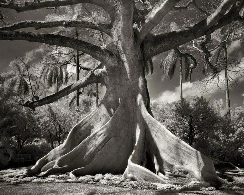 vecchi alberi 3