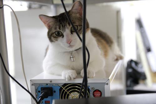 gatti ufficio Giappone (6)