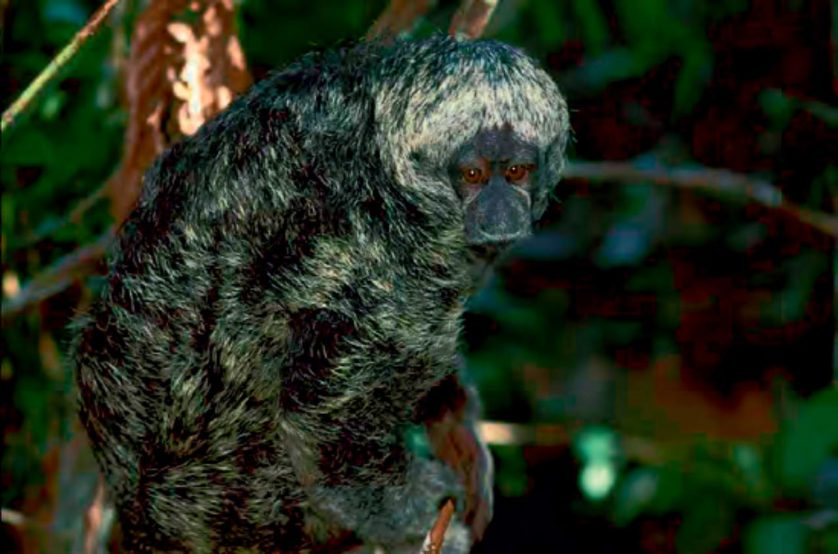 especies descobertas em 2014 11--