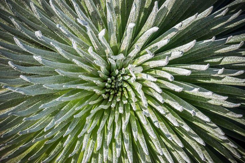 piante geometriche 15