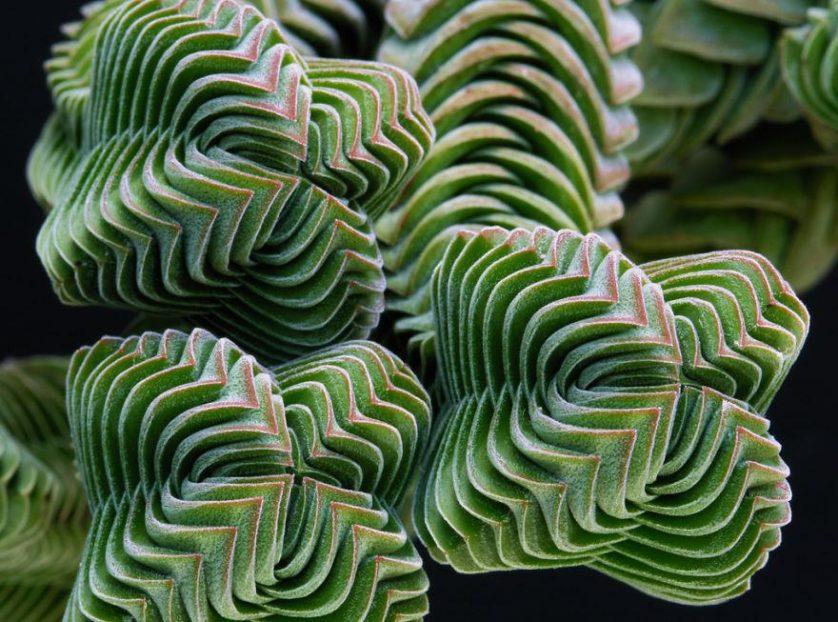 piante geometriche 3