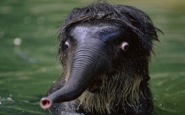 animais surpresos atonitos (1)