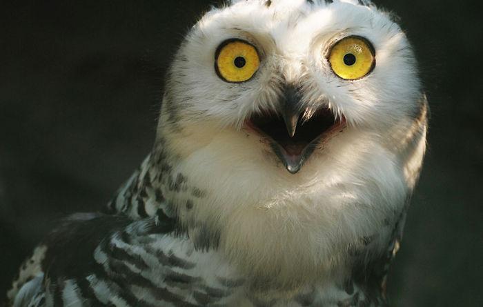 animais surpresos atonitos (21)