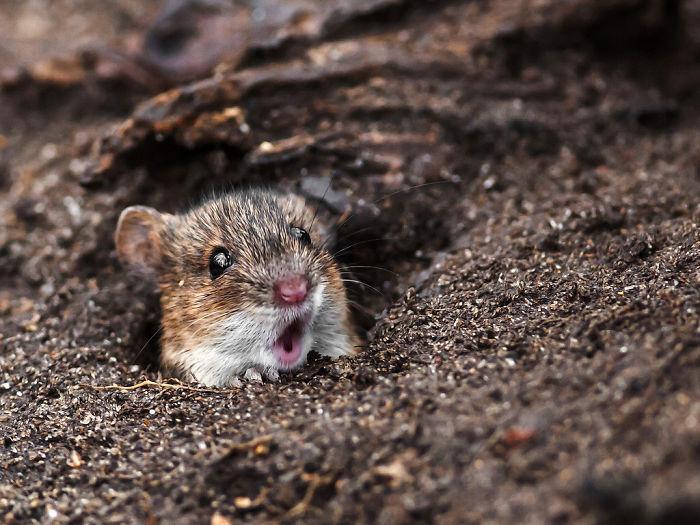 animais surpresos atonitos (6)