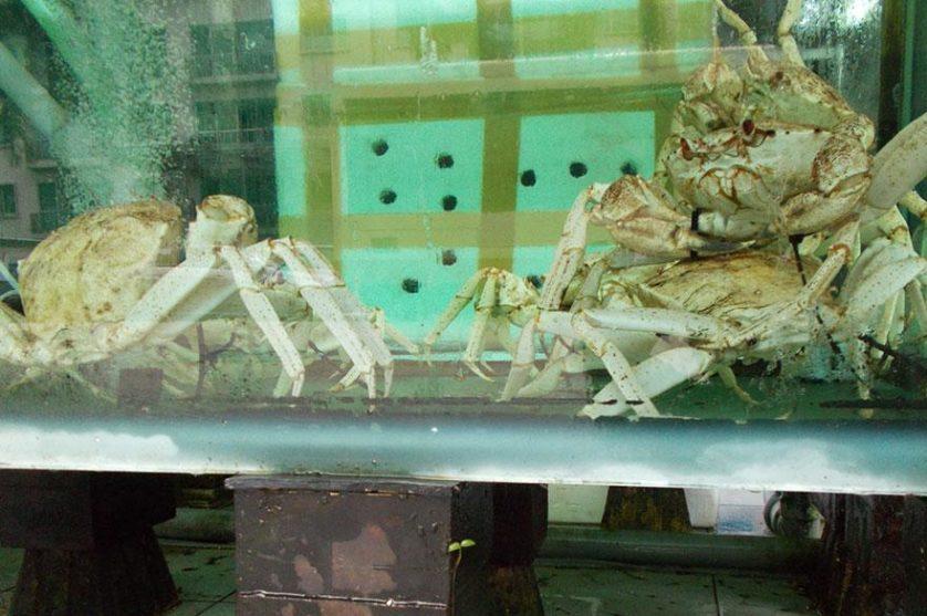 cao foto batidas do coracao (3)