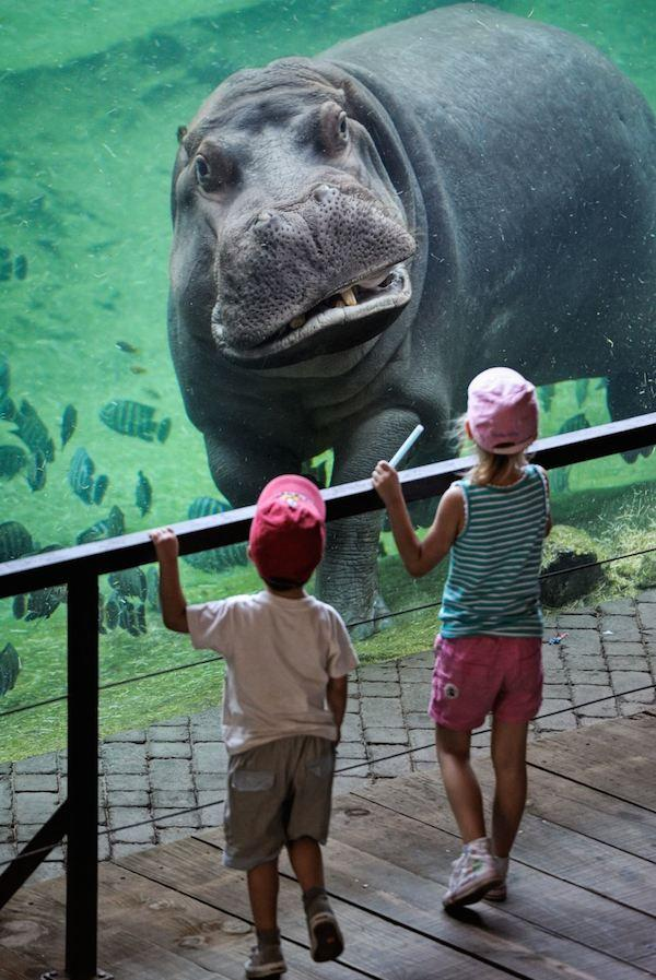 Valencia's Friendly Hippo