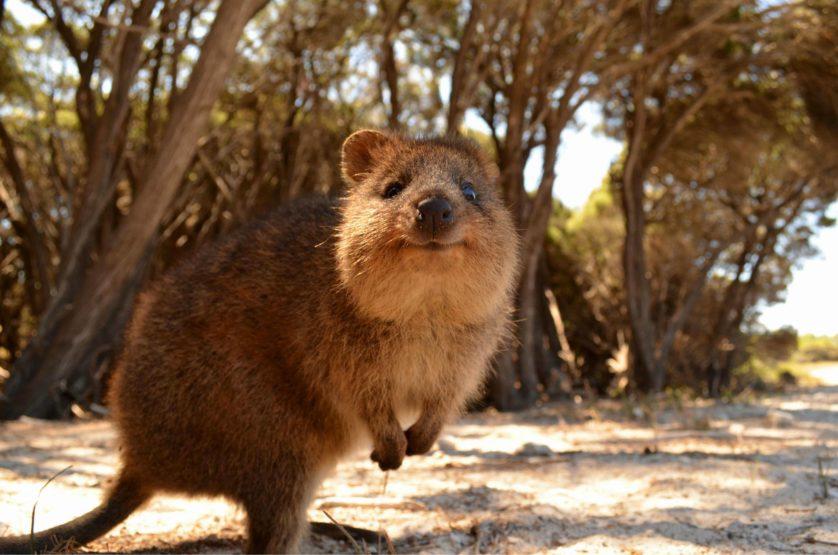 animais da australia 7