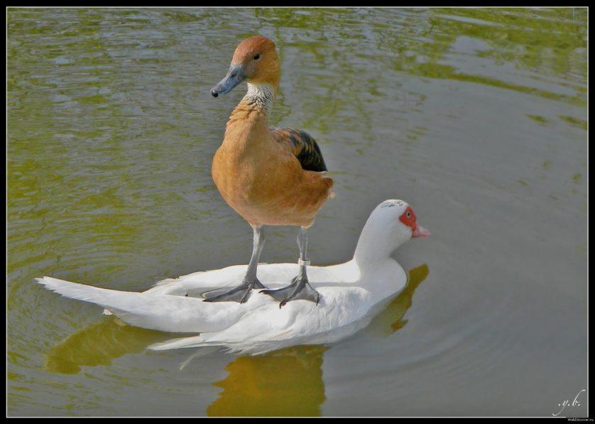 animais pegando carona em outros animais 3