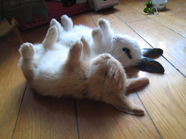 coelhos mais fofos (10)