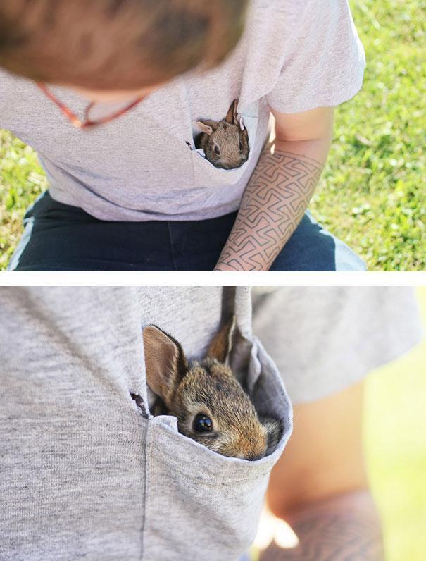coelhos mais fofos (16)
