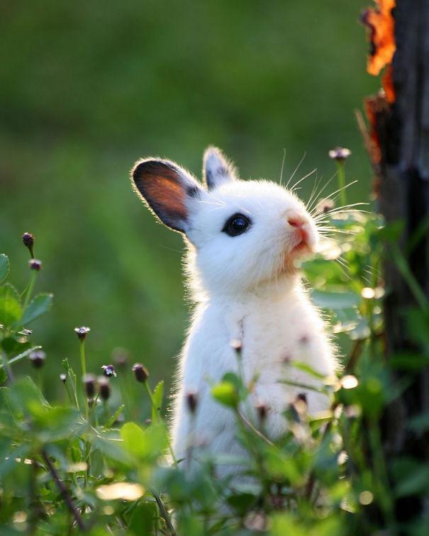 coelhos mais fofos (2)