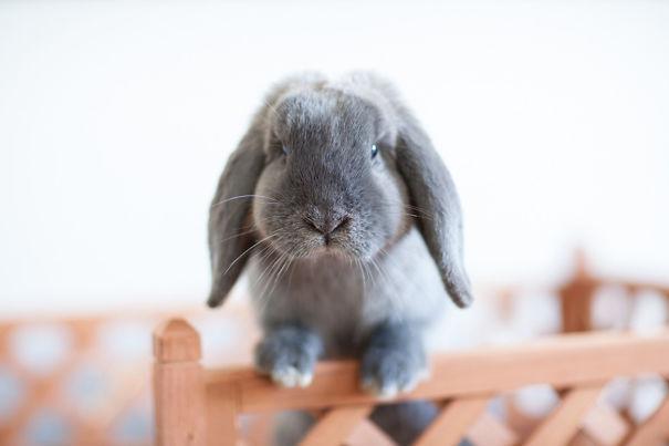 coelhos mais fofos (3)