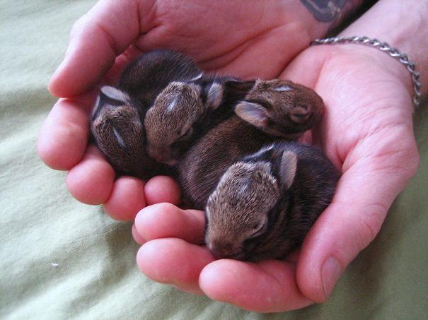 coelhos mais fofos (7)