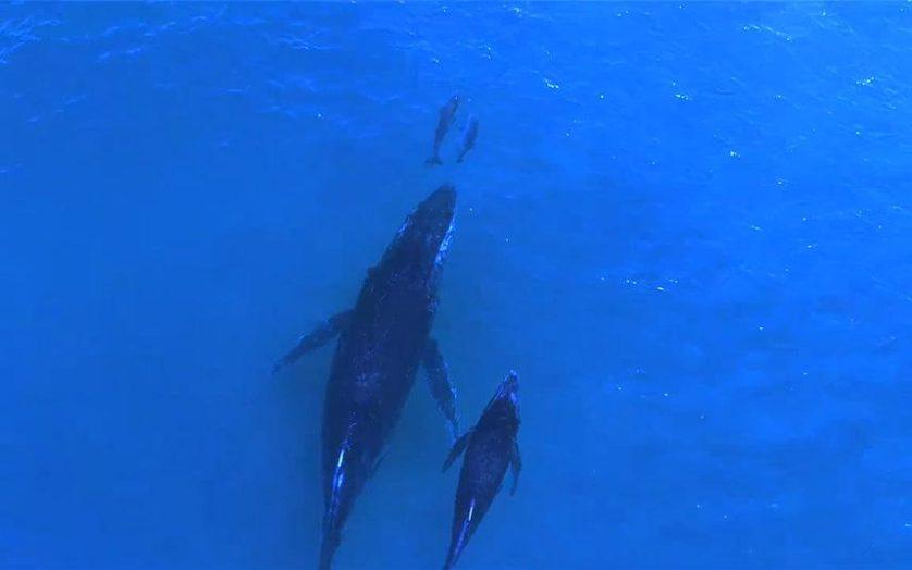 baleia e golfinho 2