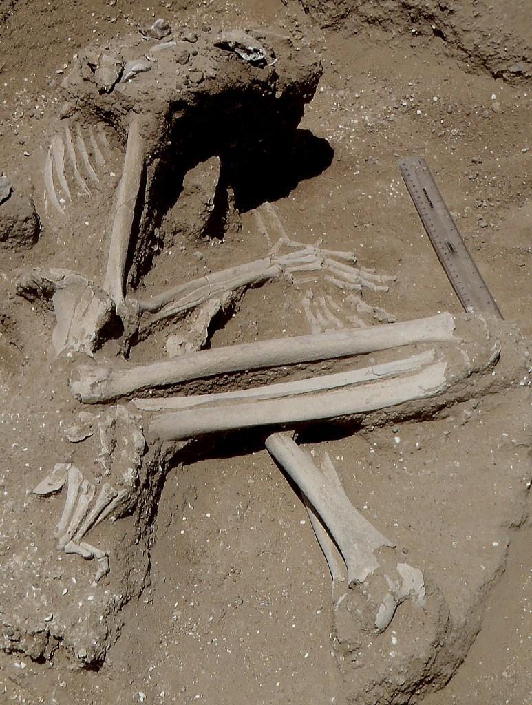 https://i2.wp.com/hypescience.com/wp-content/uploads/2016/01/massacre-seres-humanos-dez-mil-anos-atras2.jpg