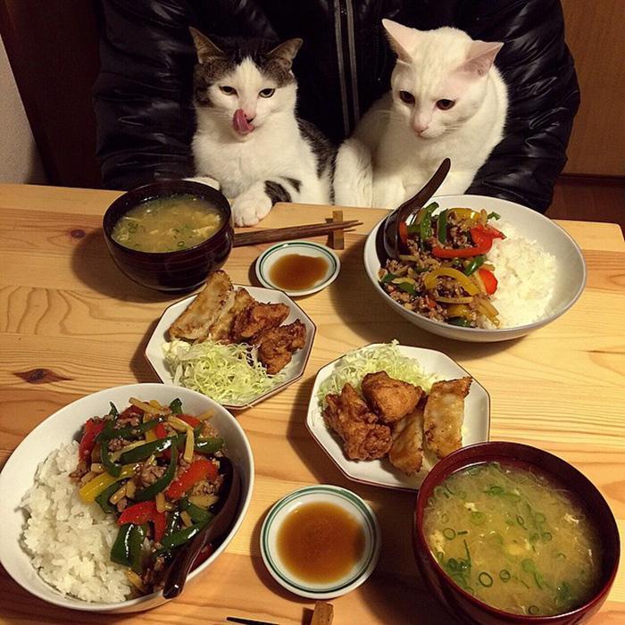 https://i2.wp.com/hypescience.com/wp-content/uploads/2016/03/gatos-ver-seus-donos-comerem-1.jpg