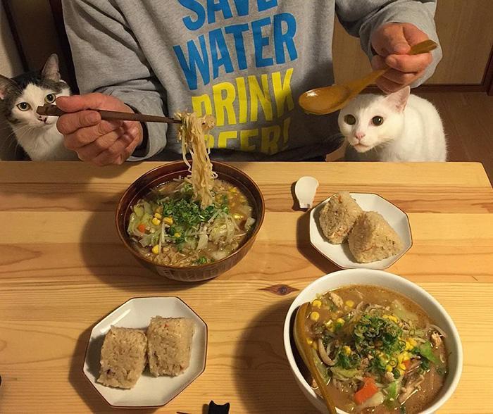 https://i2.wp.com/hypescience.com/wp-content/uploads/2016/03/gatos-ver-seus-donos-comerem-12.jpg