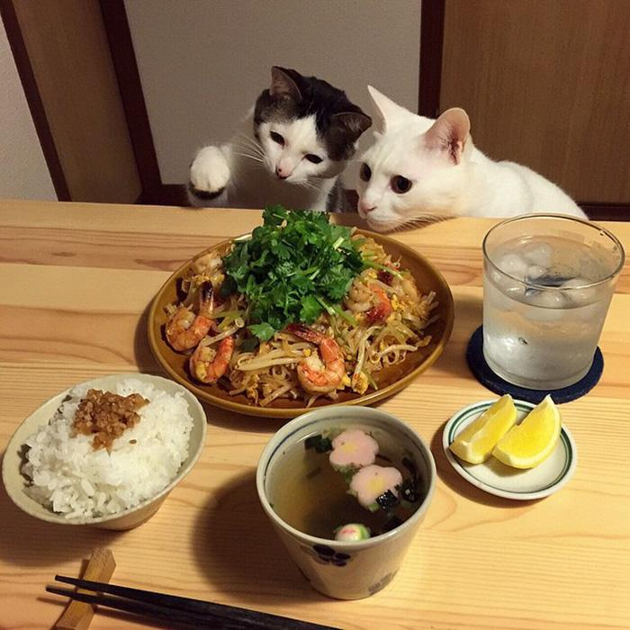 https://i2.wp.com/hypescience.com/wp-content/uploads/2016/03/gatos-ver-seus-donos-comerem-17.jpg