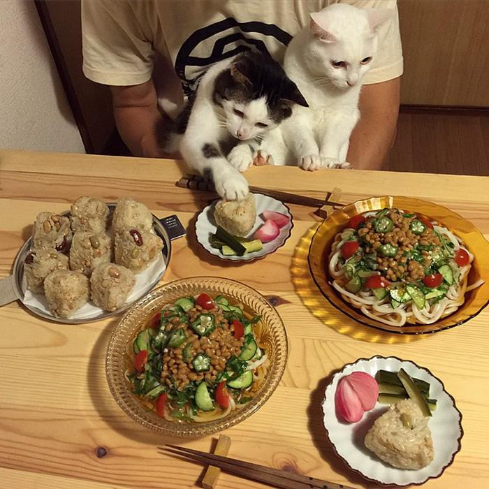 https://i2.wp.com/hypescience.com/wp-content/uploads/2016/03/gatos-ver-seus-donos-comerem-2.jpg