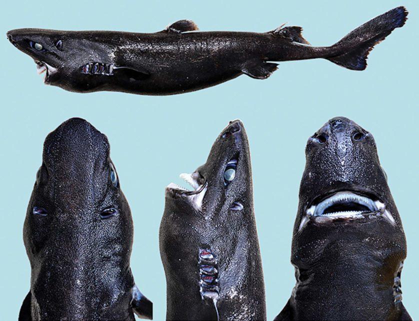 novas especies animais descobertas 5