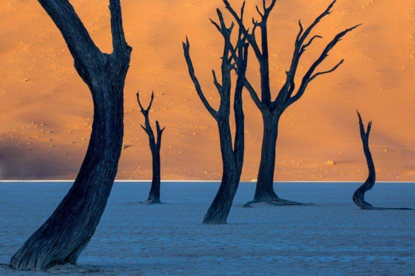 árvores mortas